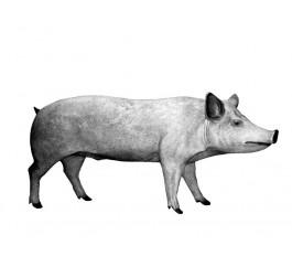 Свинья арт. 093