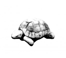 Черепаха  (224)