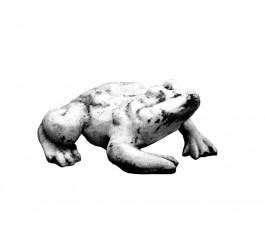 Жаба  (304)